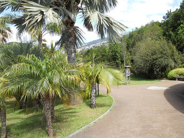 Le jardin botanique de funchal page 2 for Amis du jardin botanique